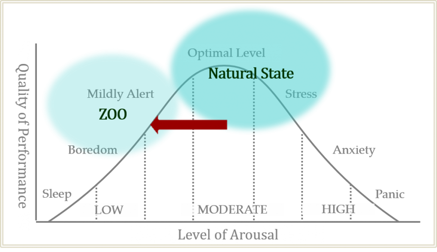 Figure animals in nature vs zoo