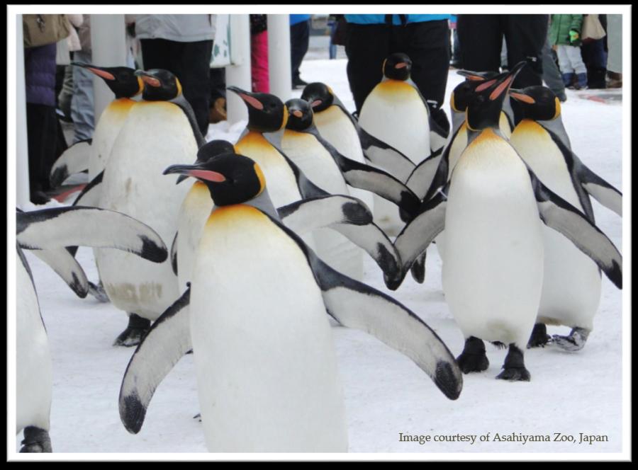 Penguin asahiyama