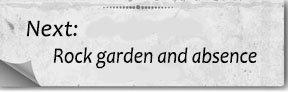 Next bottom rock garden and