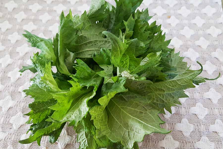 How to use shiso?